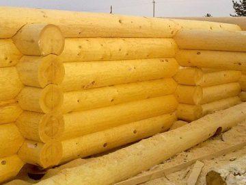 Ель или сосна – выбор оптимального варианта для строительства дома.